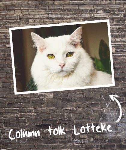 afbeelding column tolk lotteke bakstenen achtergrond met foto van een kat